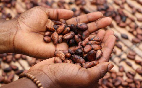 Kakao – Die Speise der Götter